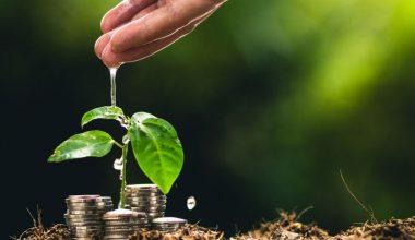 ¿Cuál es el rol de la Filantropía ambiental en Chile?